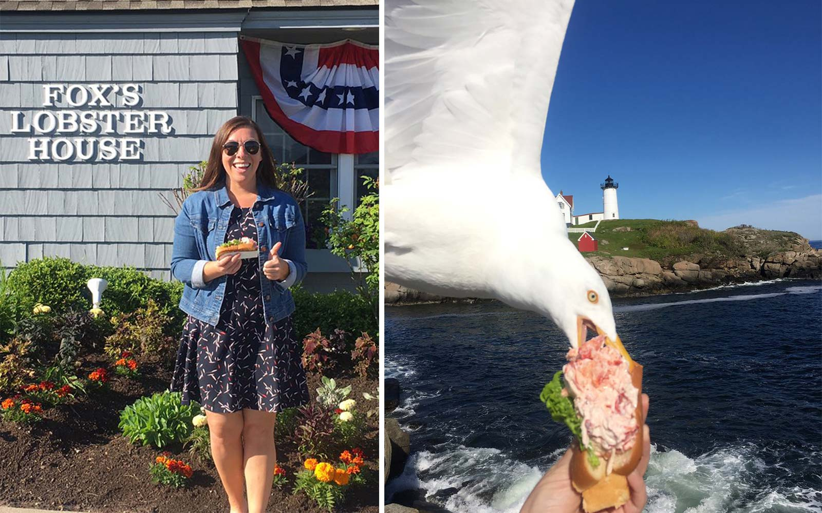 This Woman Snapped a Photo at the Exact Moment a Seagull Was Stealing Her $21 Lobster Roll