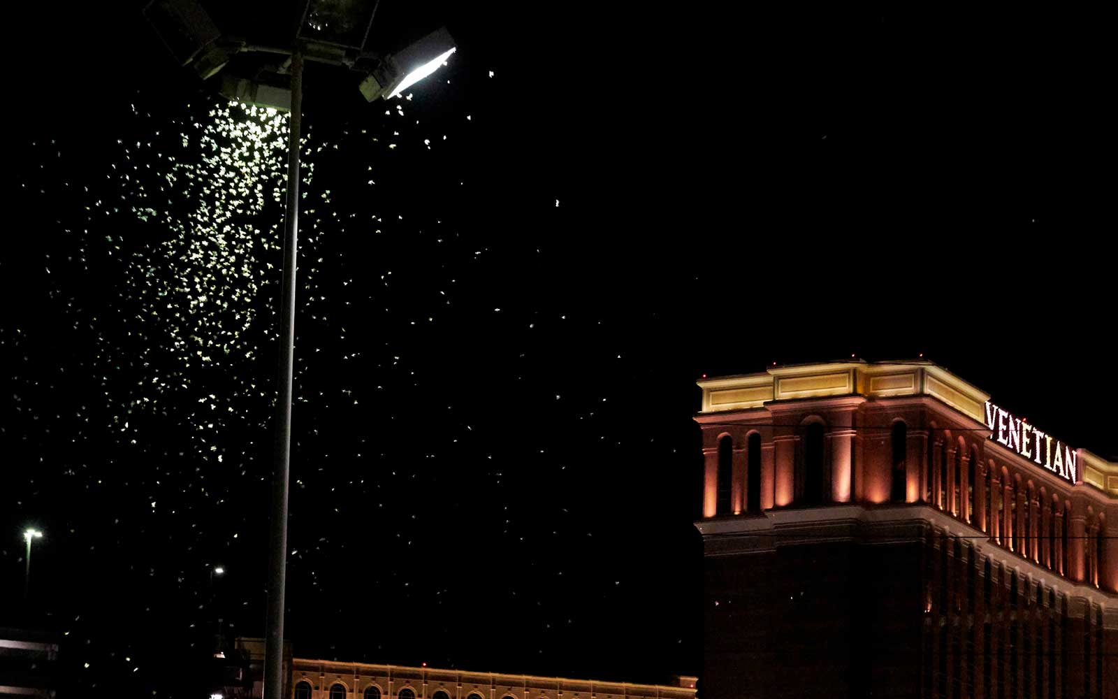 Massive swarms of grasshoppers have descended on the Las Vegas Strip this week, startling tourists and residents as they pass through town on their northbound migration.