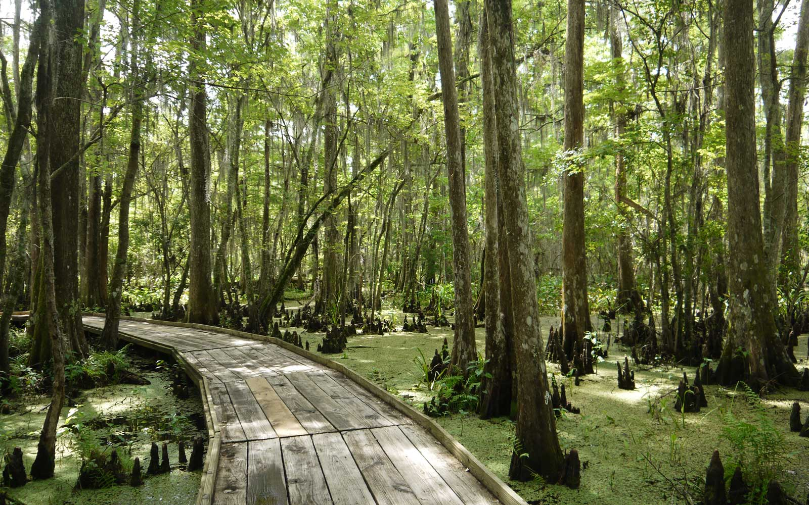 Explore everything from Cajun cooking to encounters with alligators and turtles at the Jean Lafitte National Historical Park and Preserve.