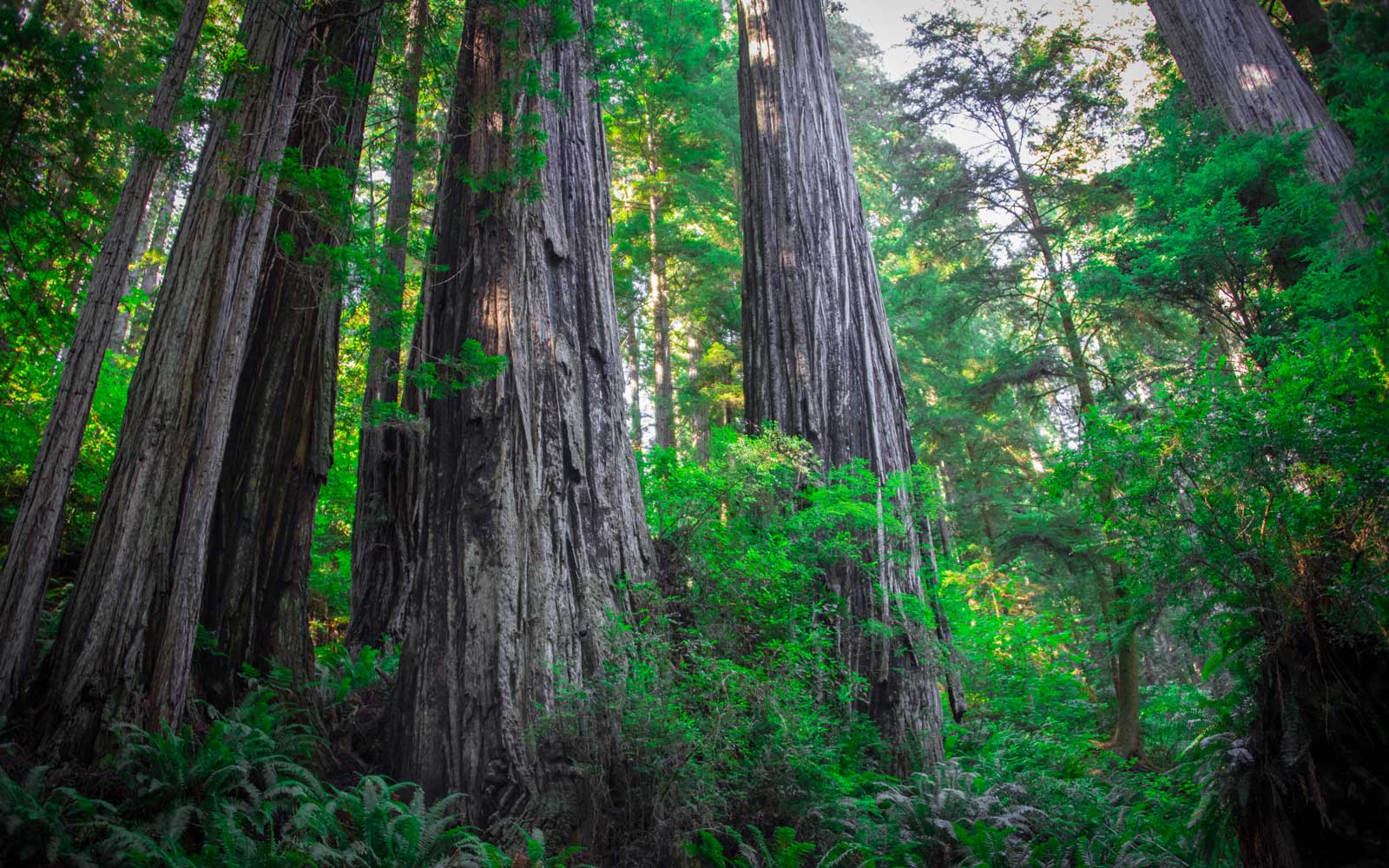 See the world's tallest trees at Redwood National Park.