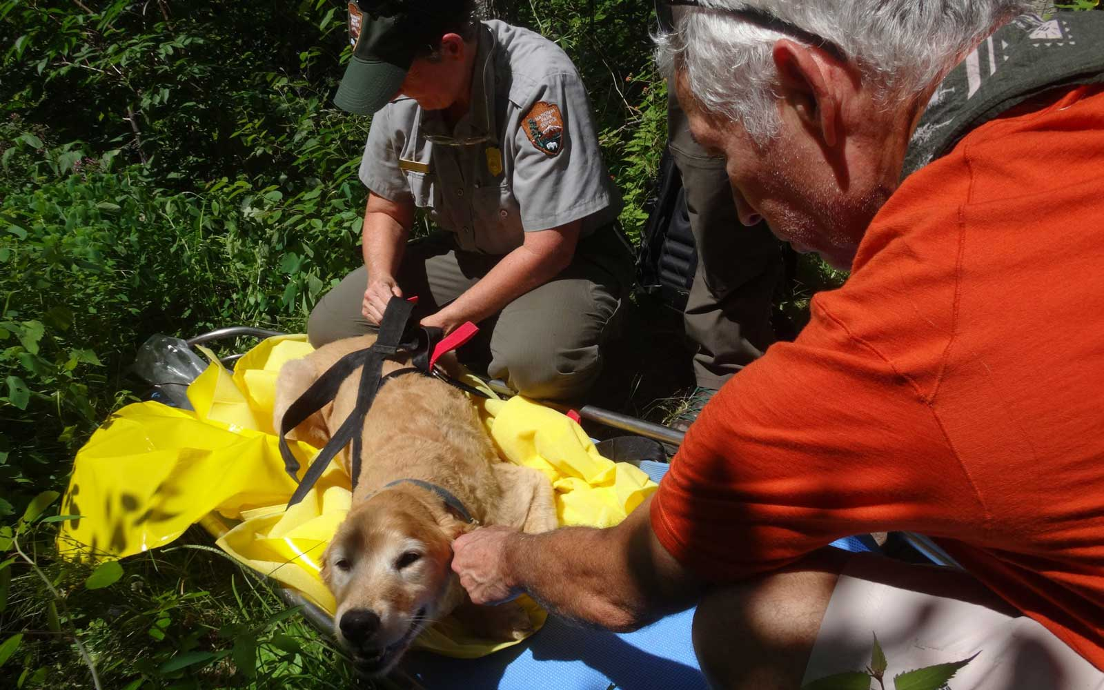 Missing dog found and rescued by hikers in Shenandoah National Park