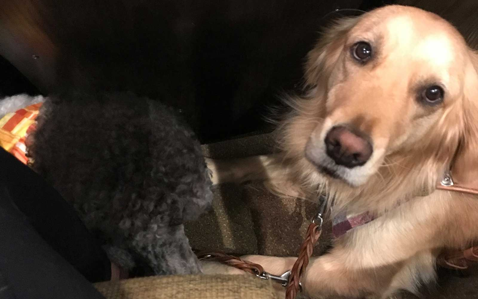 K-9 Country Inn service dogs