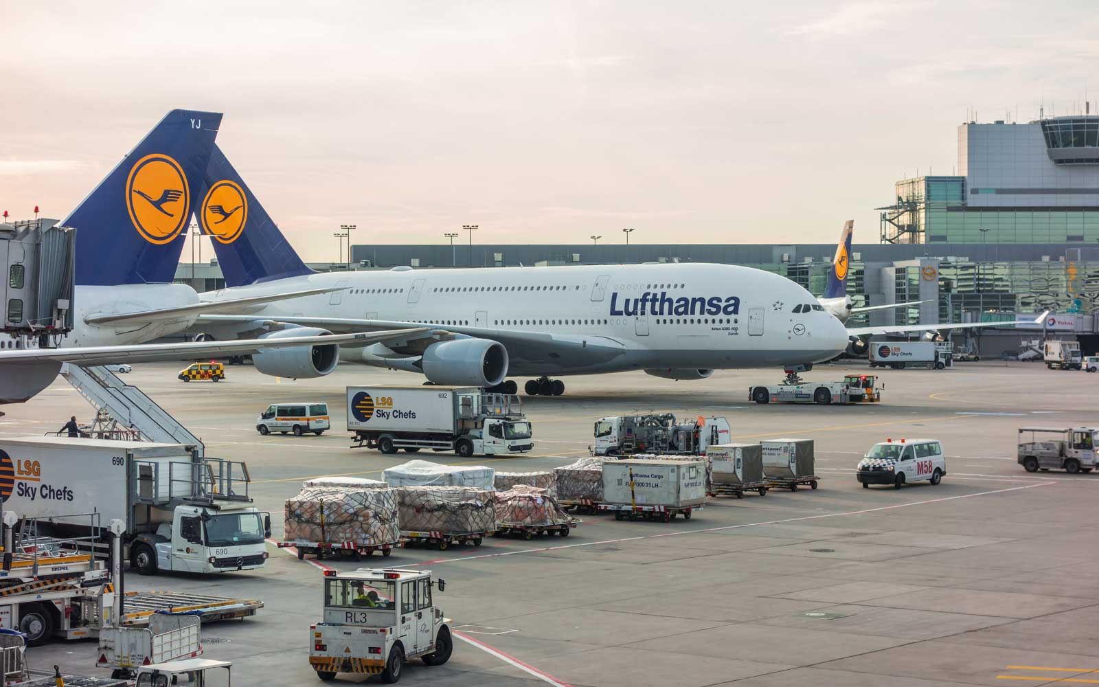 Lufthansa Airlines Loses Cat During Transit