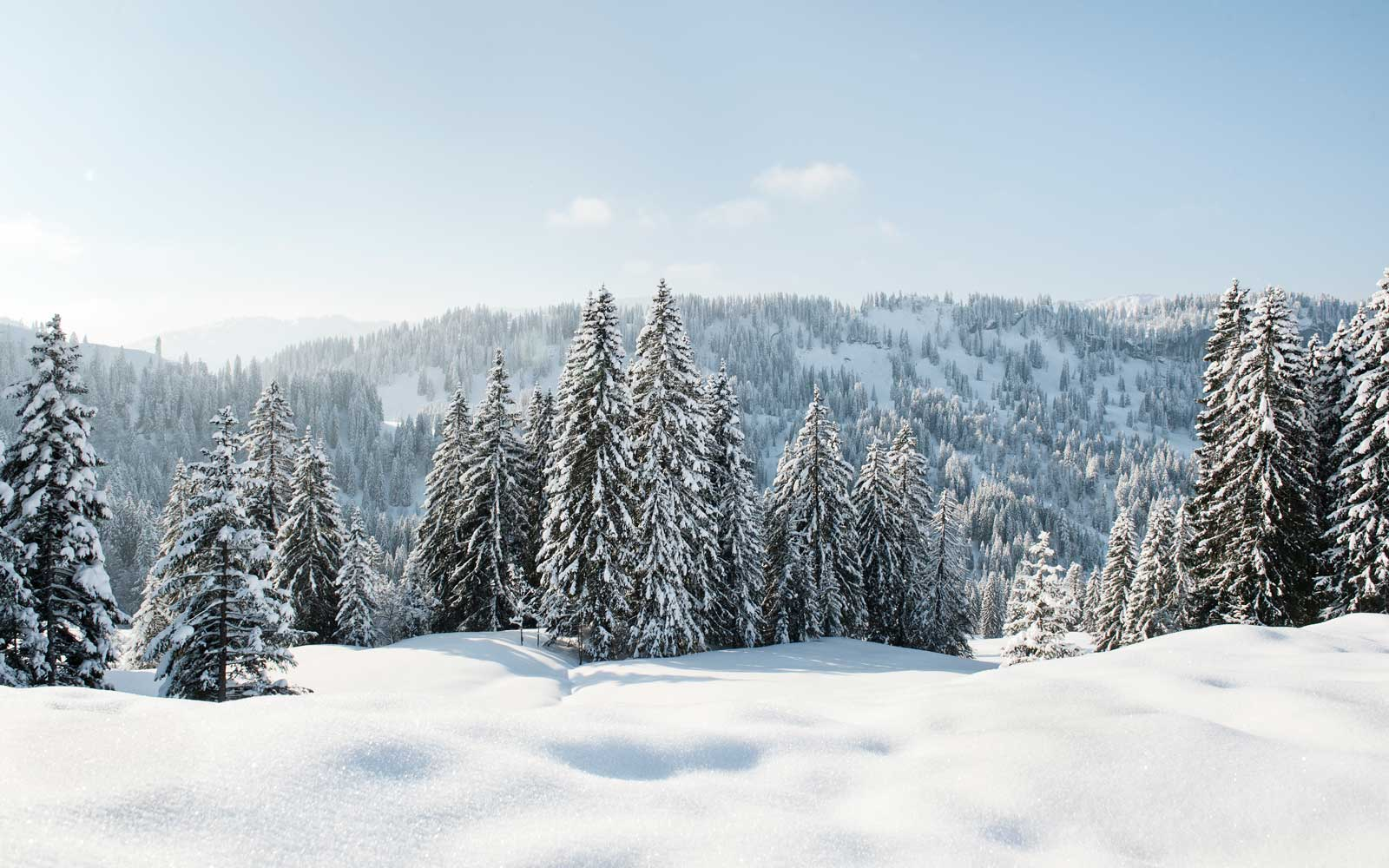 A sunny winter forest scene in Germany