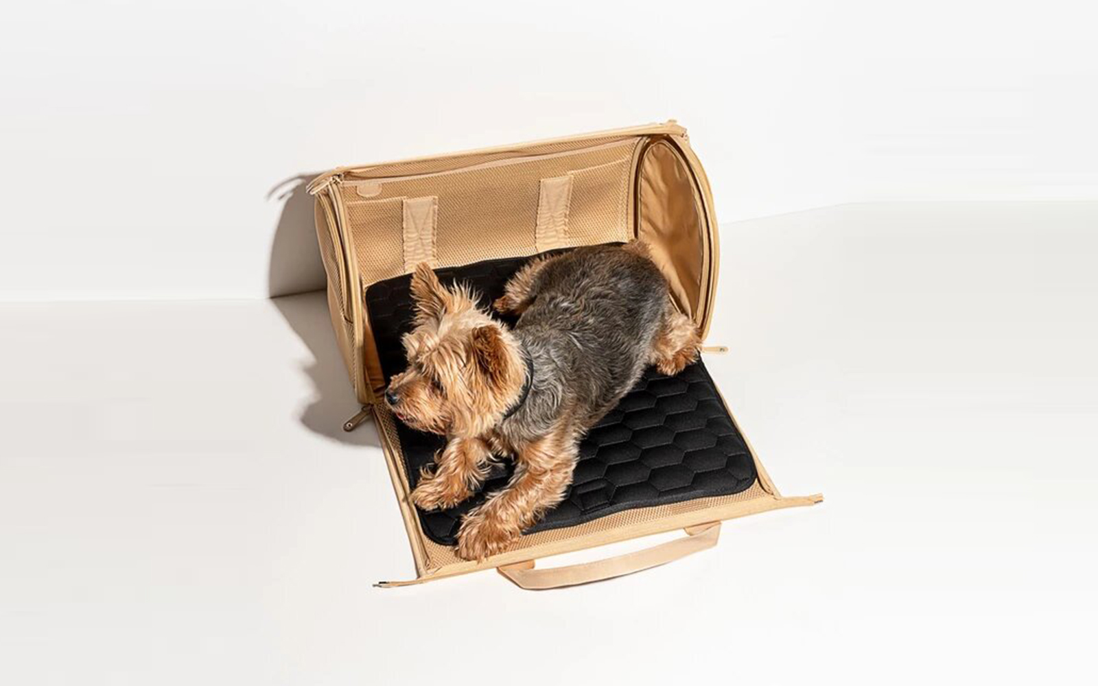 Airline Compliant Dog Carrier Wild One