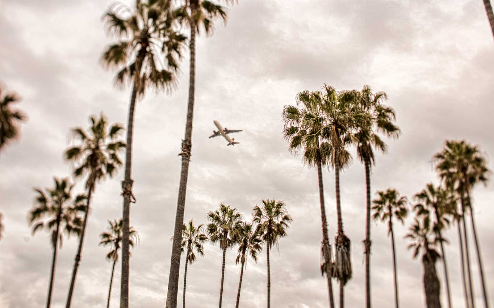 An airplane flying over palm trees