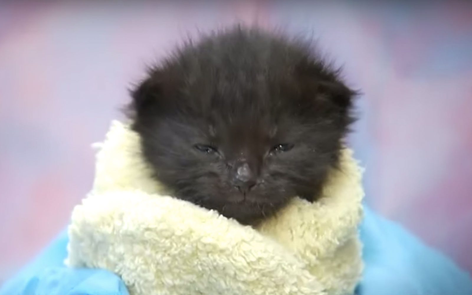 This Animal Shelter in Vegas Is Looking for Volunteers to Help Feed, Clean, and Cuddle Tiny Kittens