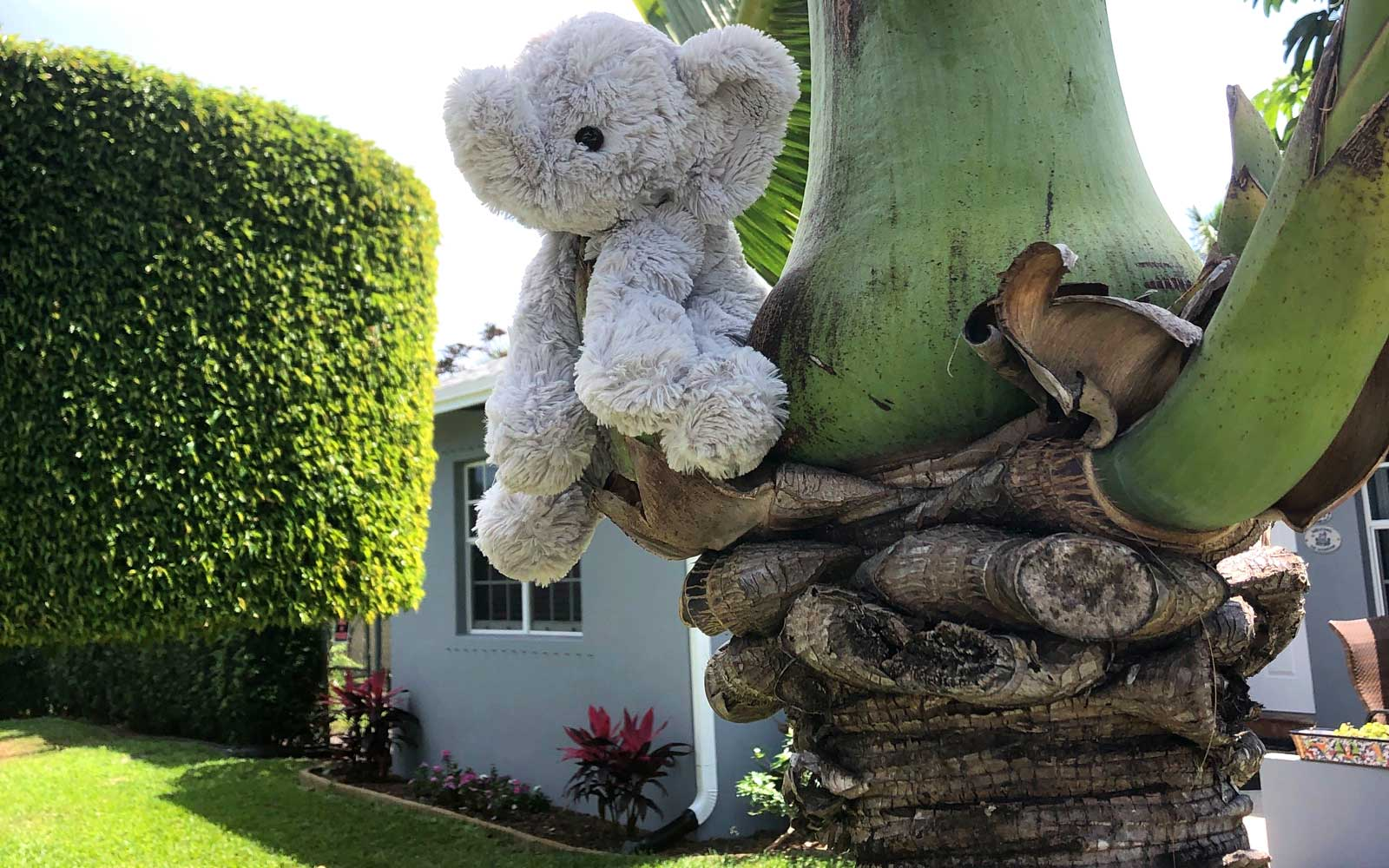 College Park Neighborhood in Lake Worth, FL hides stuffed animals in the yards for kids to go on safari