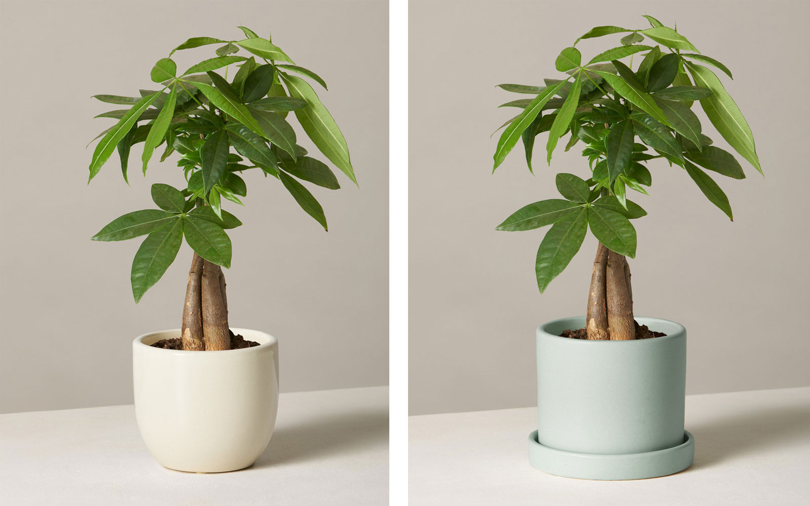House plants in planters