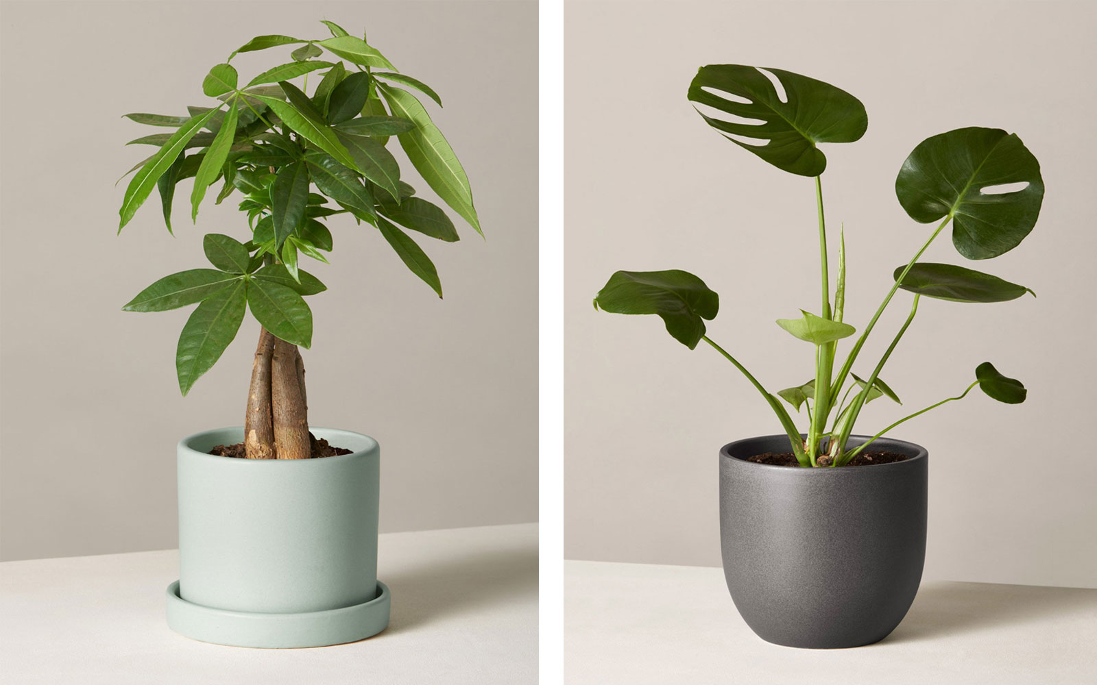 Two houseplants in planters