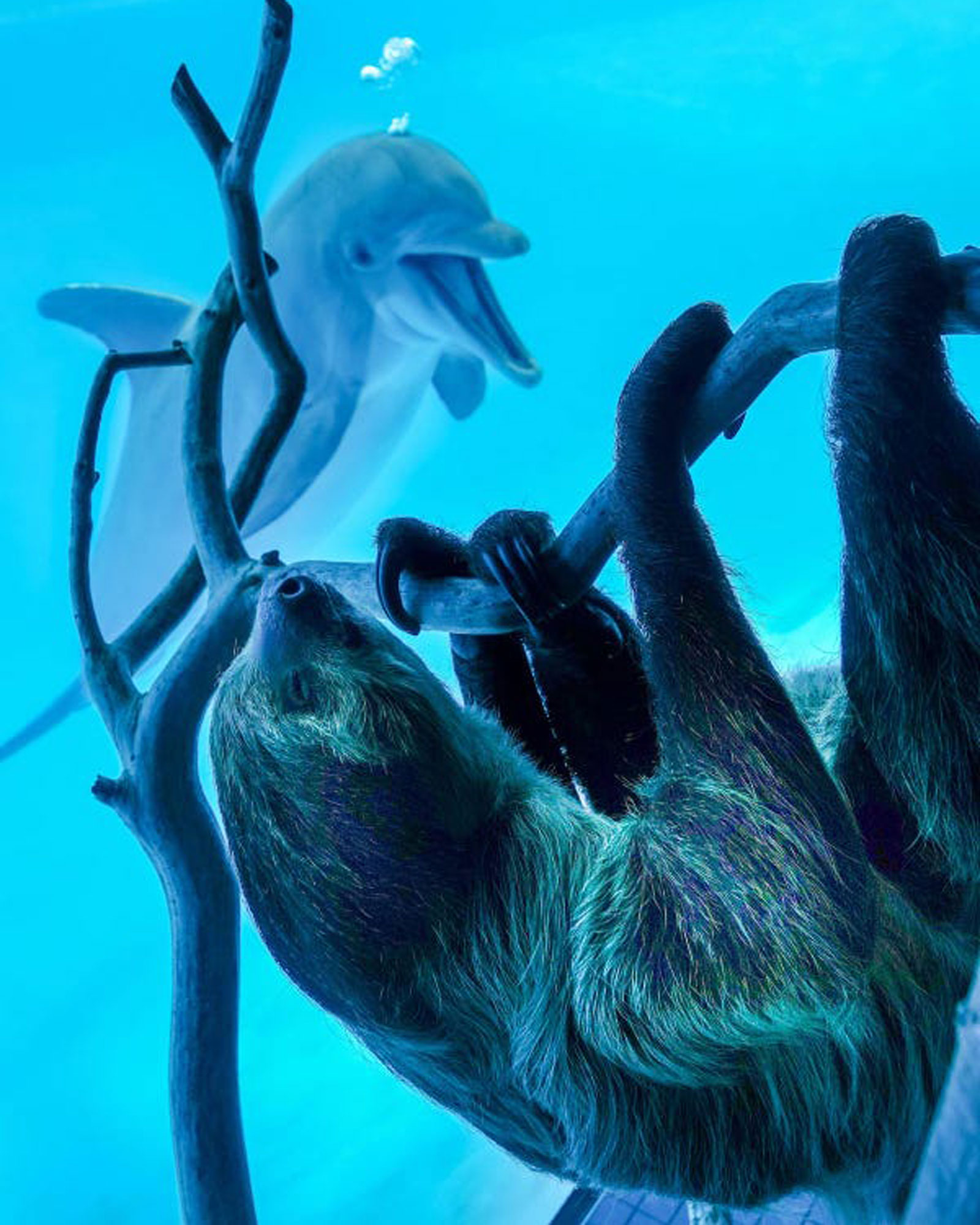 Dolphin approaching a sloth