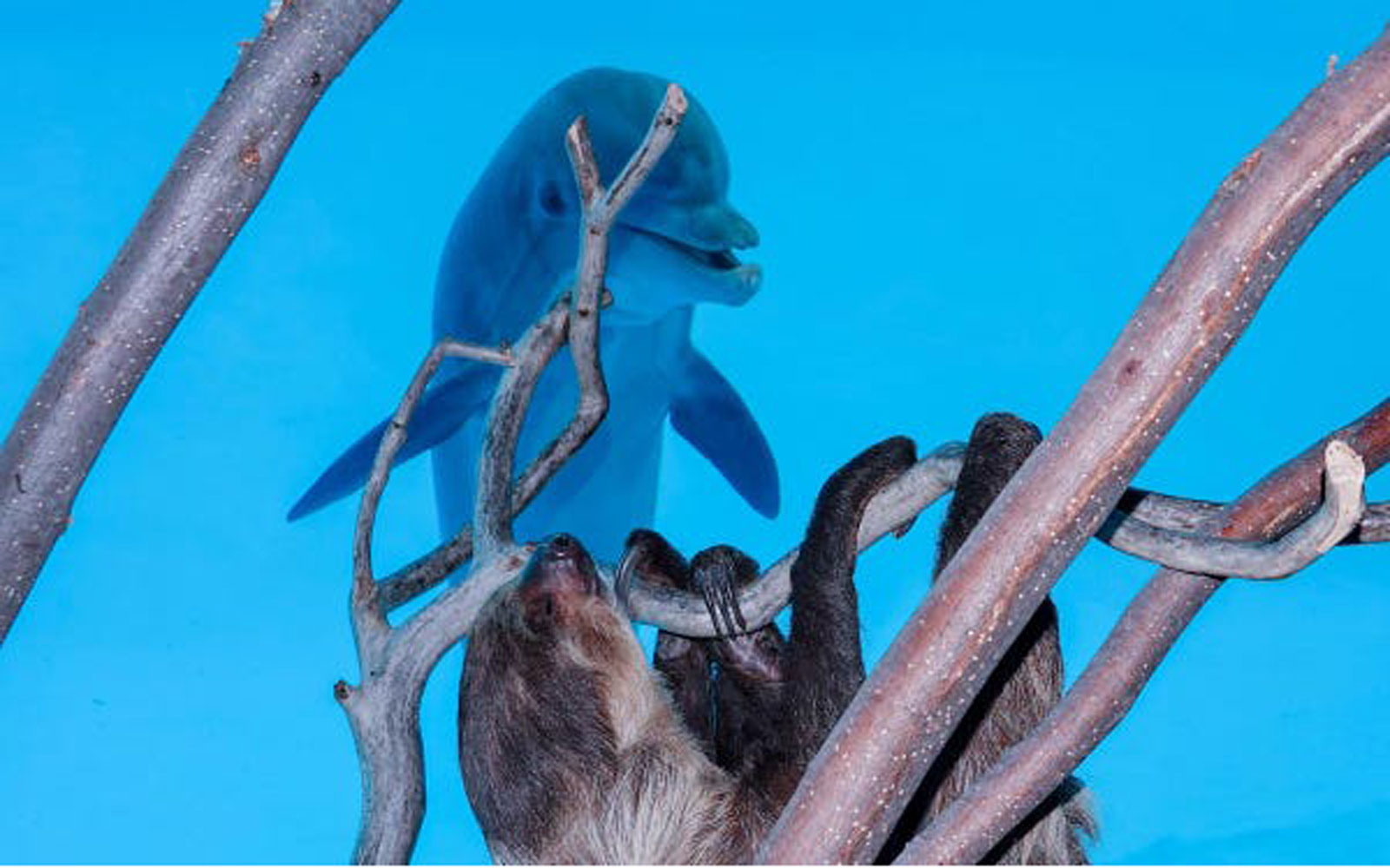 dolphin watches a sloth