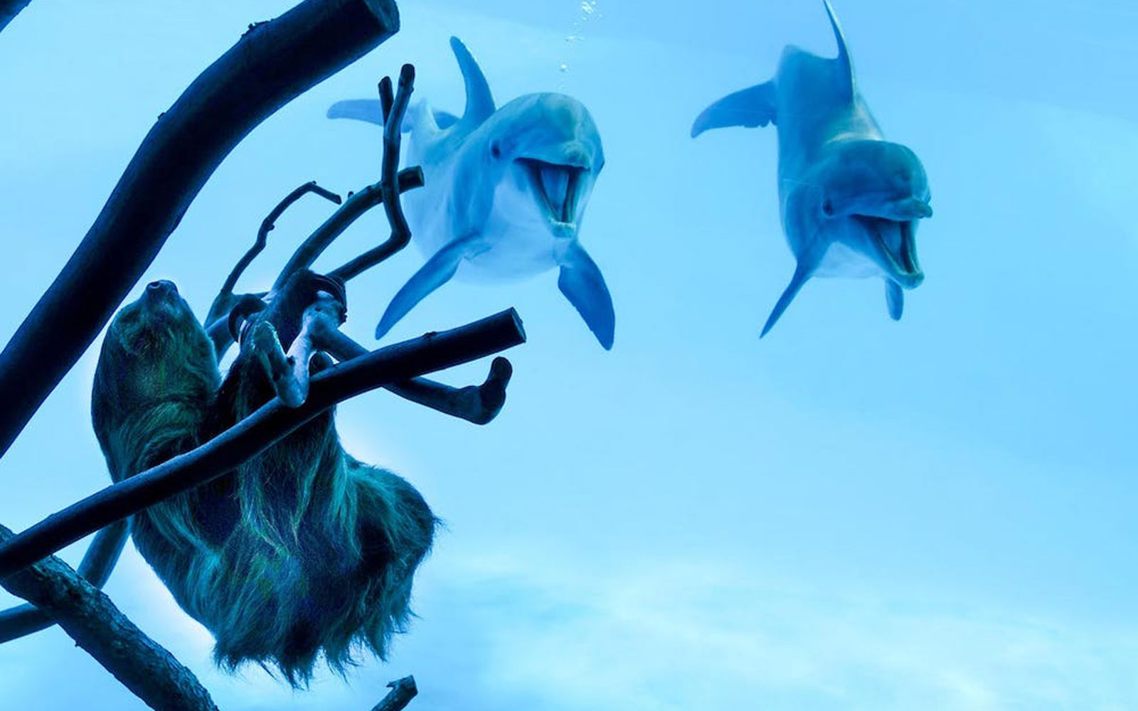 Liko and Schooner the dolphins, Chico the sloth
