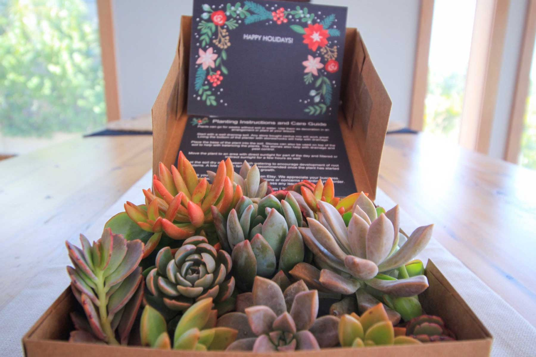Etsy Care Package of assorted succulents