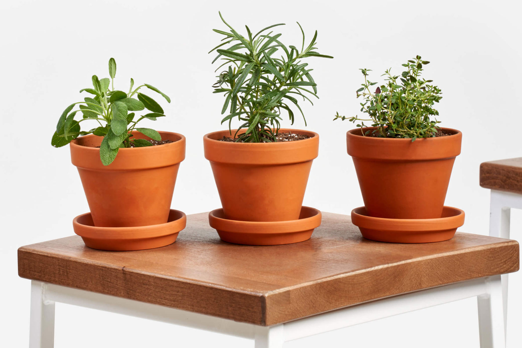 Three potted herb plants