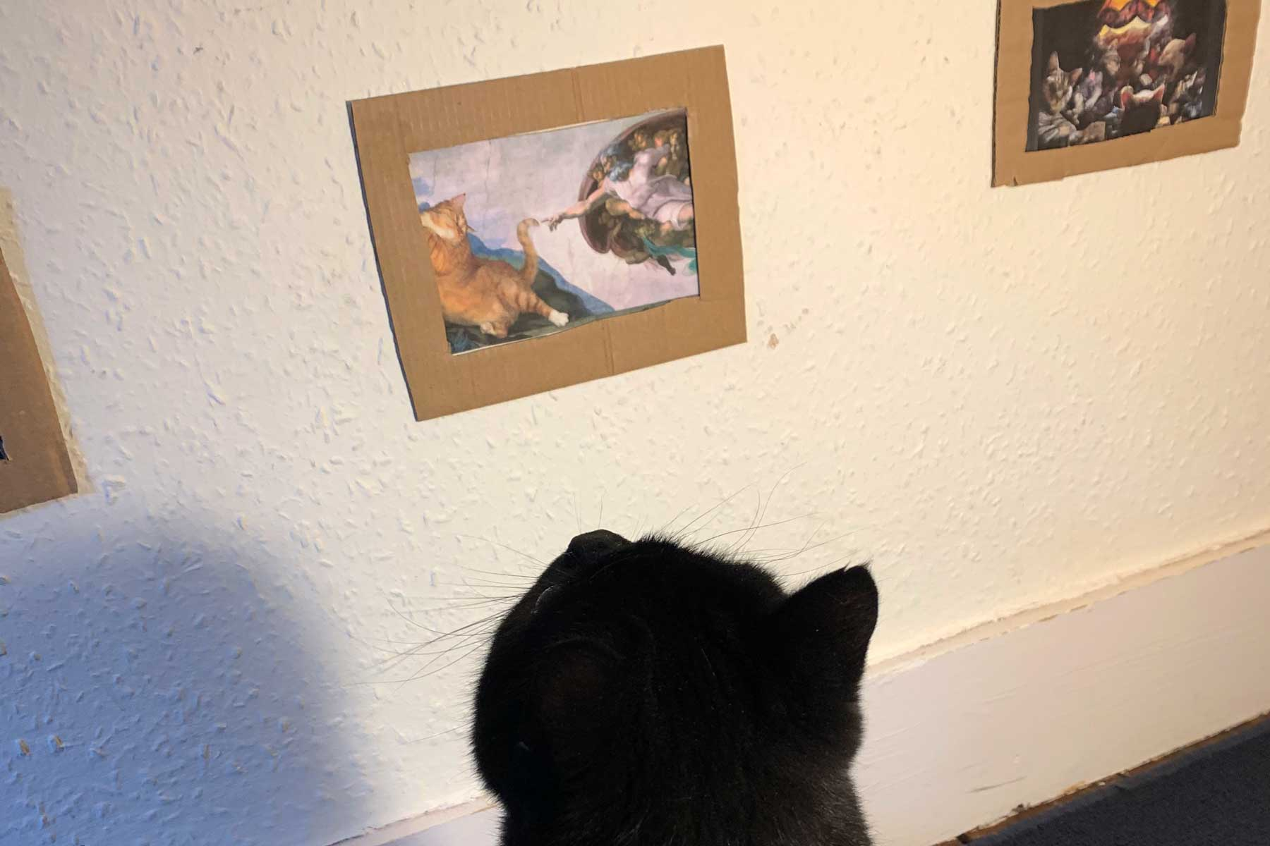 Jake Lambert and Jessica Atkins create art gallery for their one-eyed cat, Richard Parker Littlelostlad