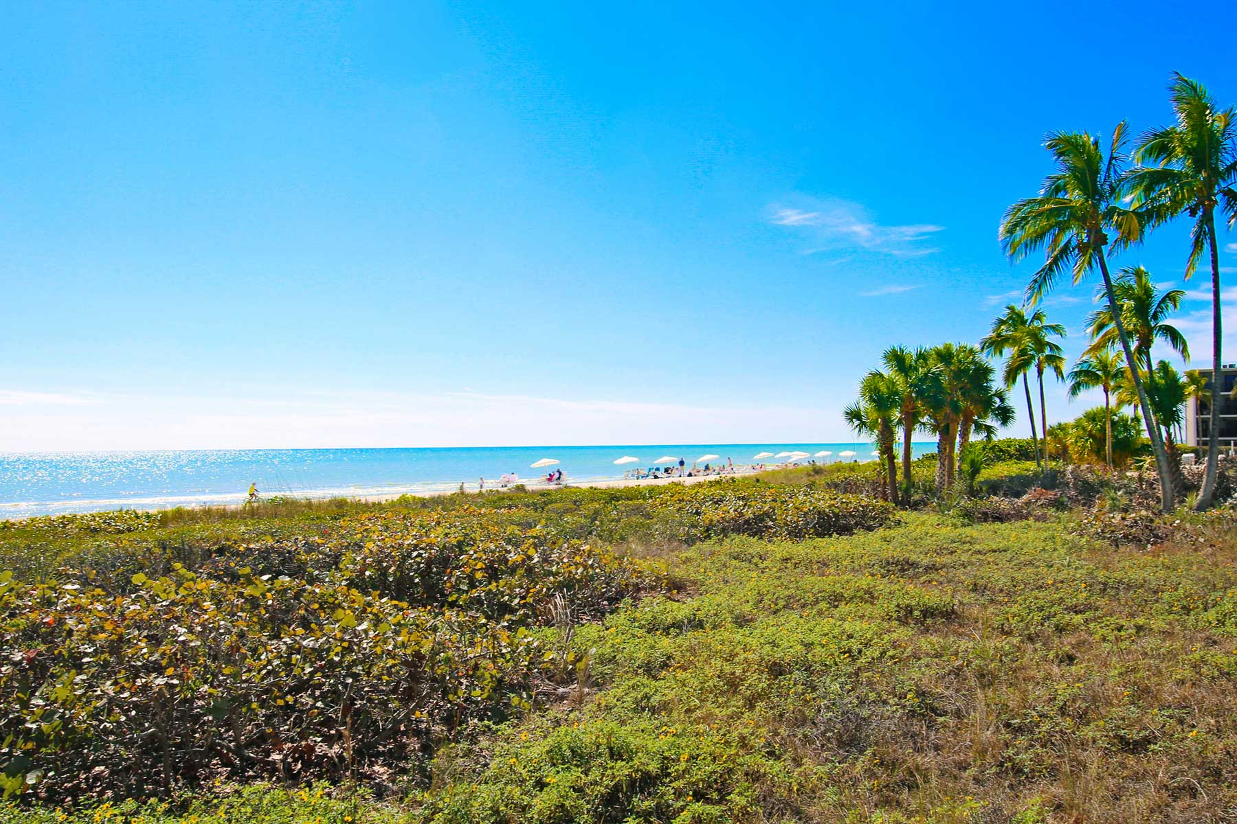 Beach with greenery and palm trees on Sanibel Island in Florida
