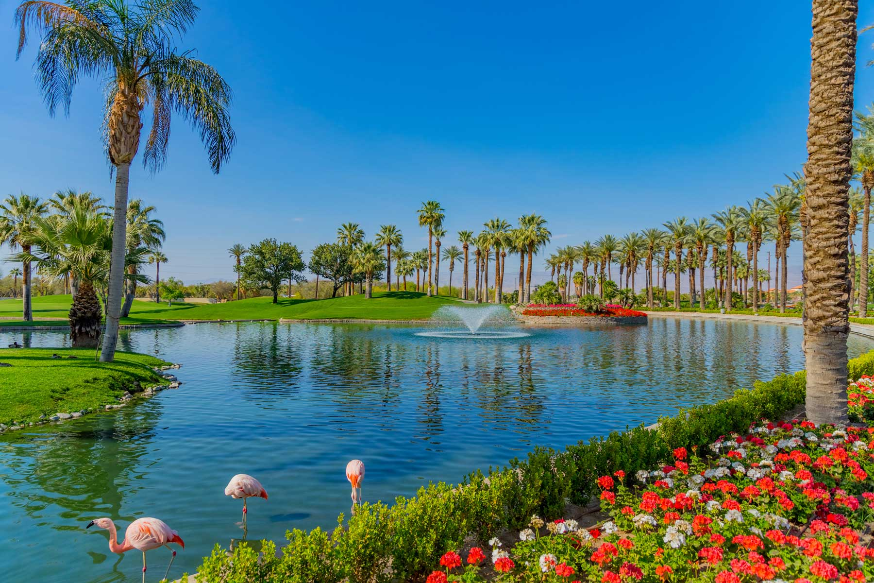 Palm Trees line a green belt and pond in Palm Springs, California