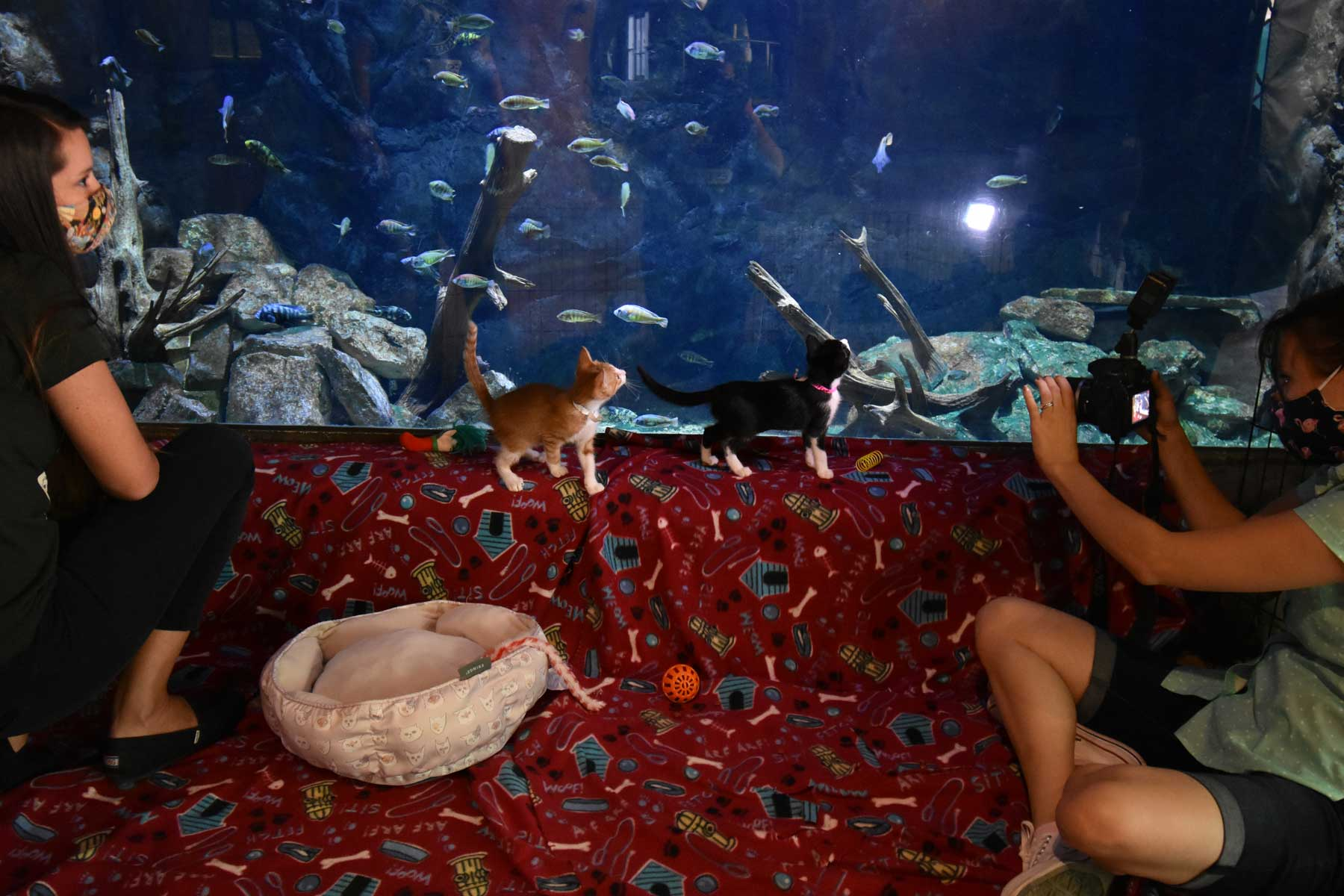 Animal Defense League visits the San Antonio Zoo with foster dogs and kittens.