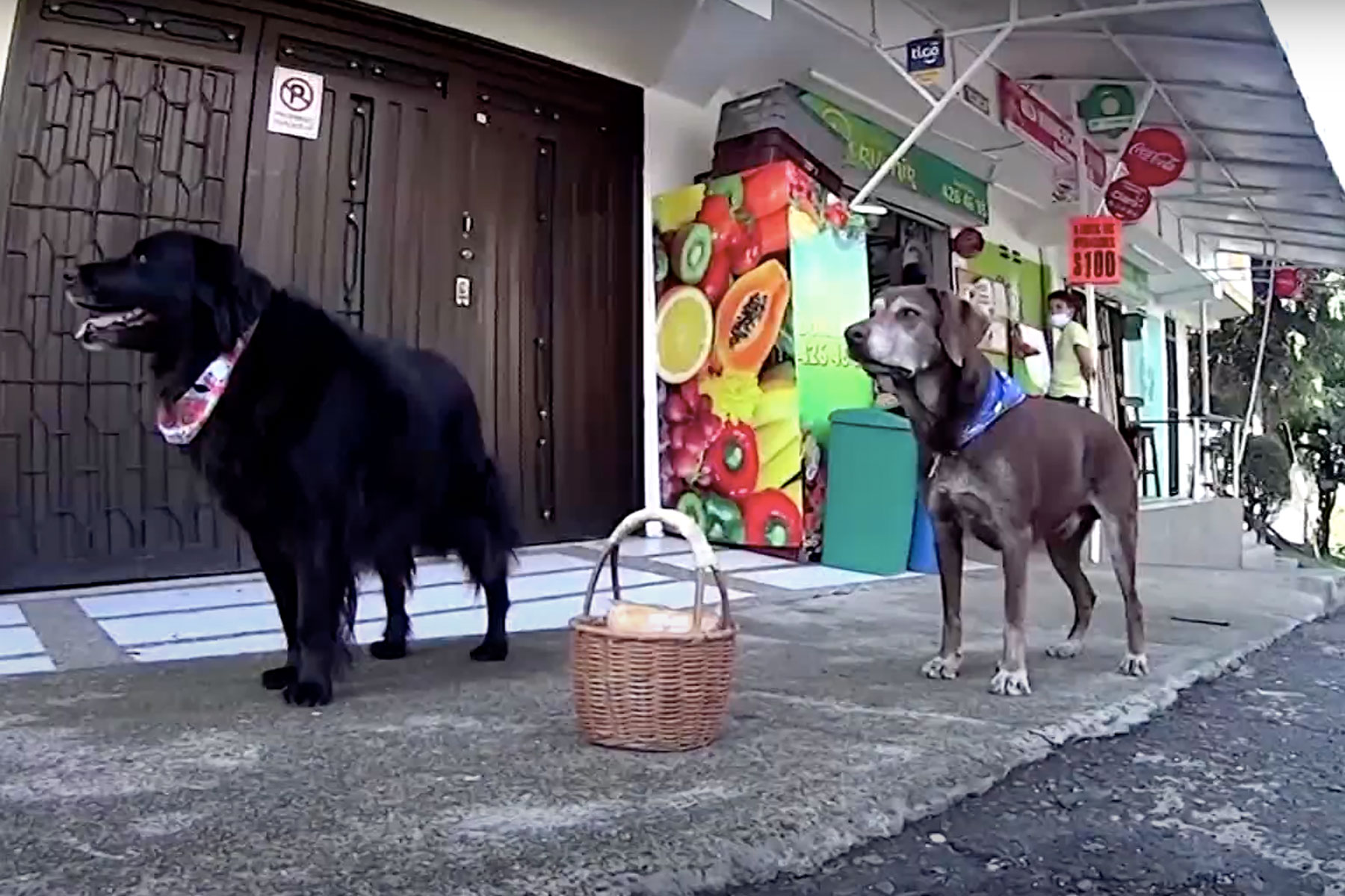 grocery delivery dogs