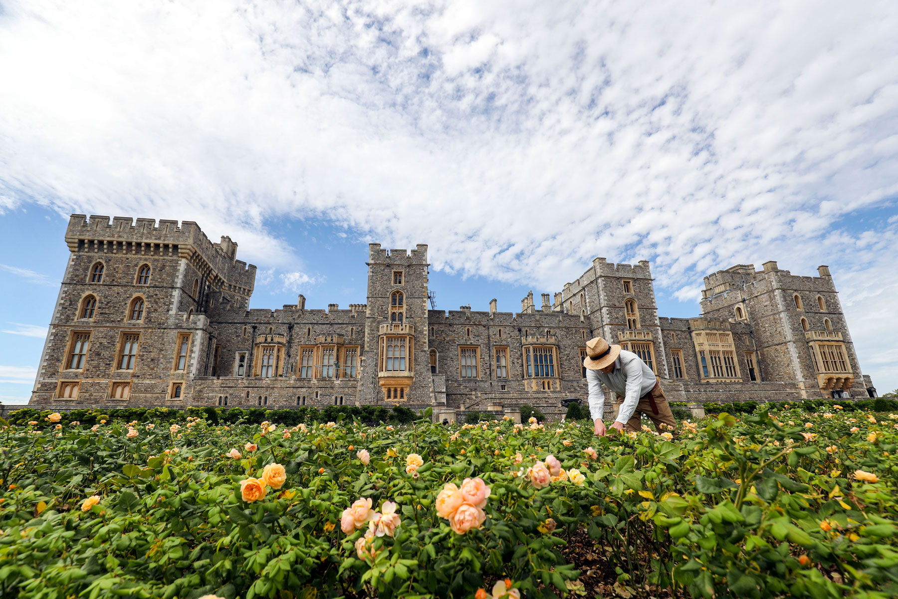 groundskeeper working in a garden at Windsor Castle