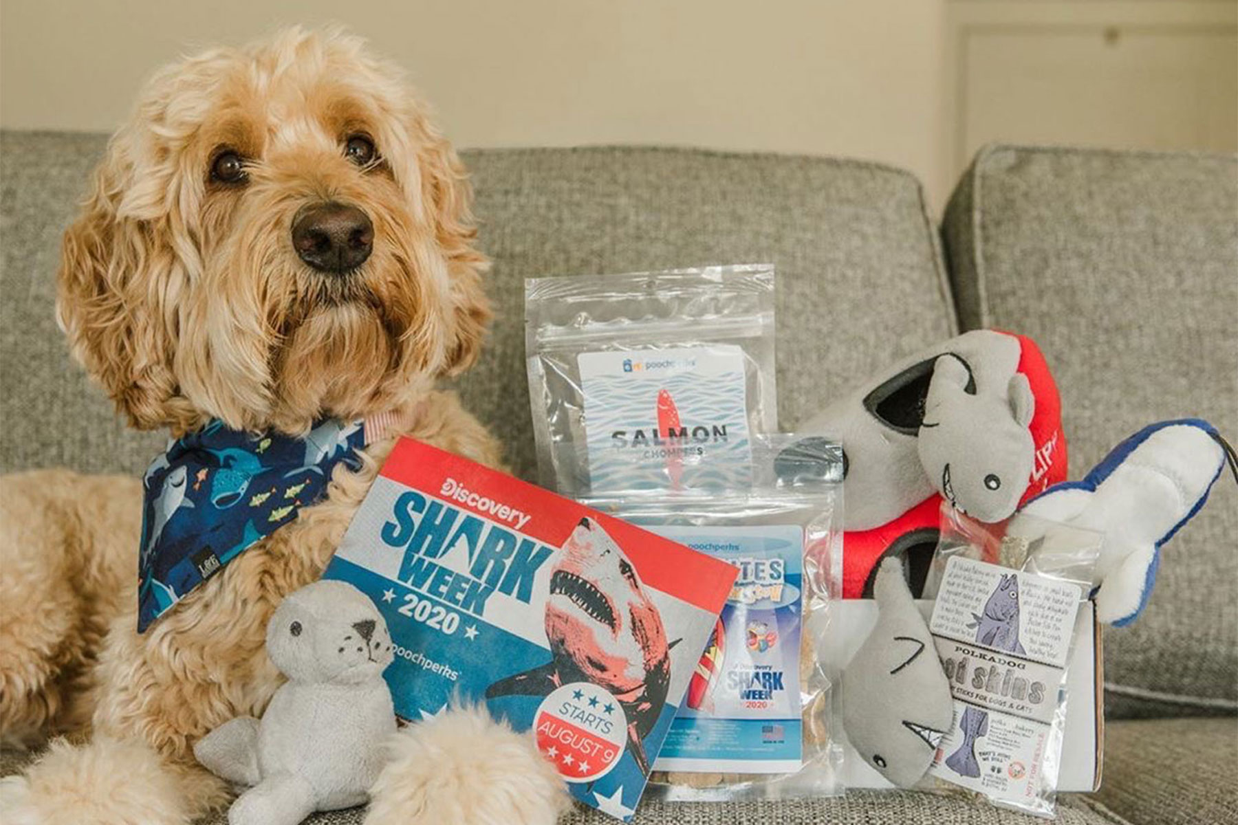 dog posed with 'Shark Week' branded toys