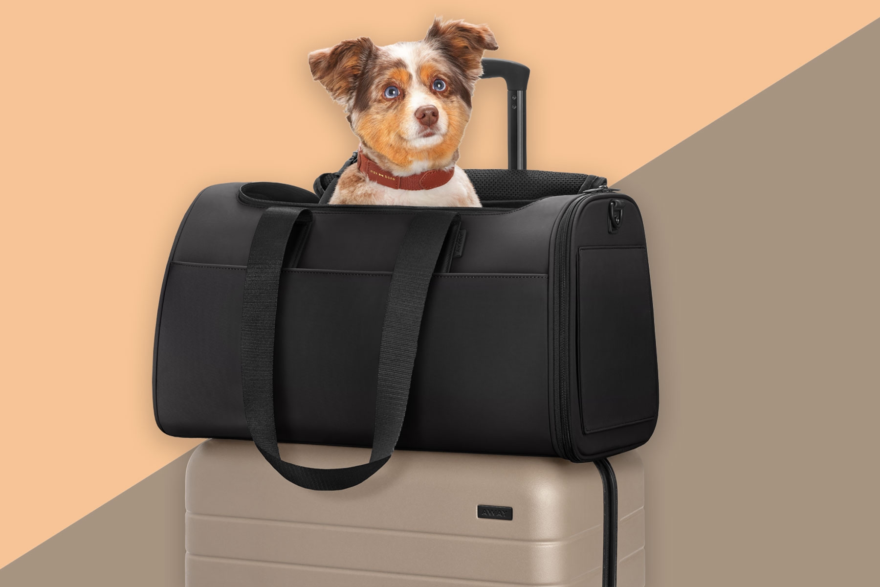 Pet carrier with dog on top of rolling suitcase