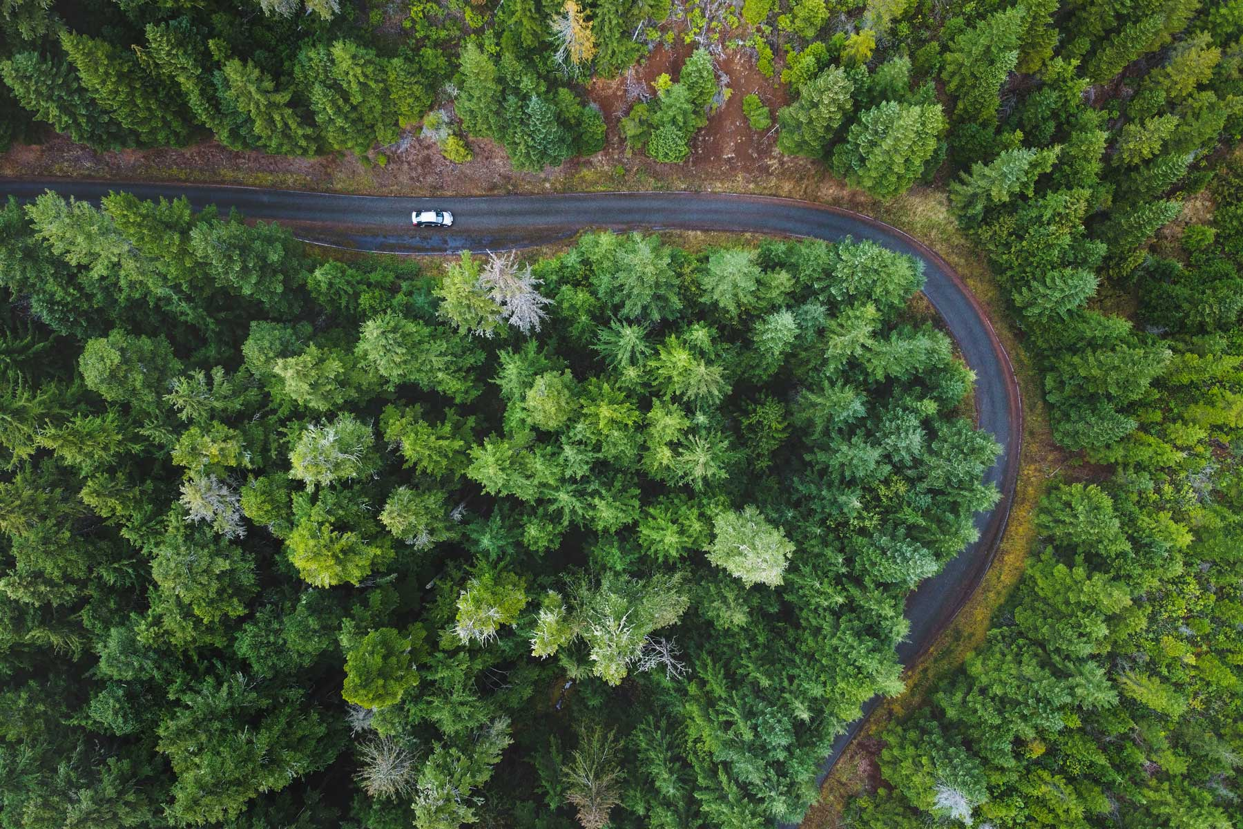 Road winding through pine trees from above