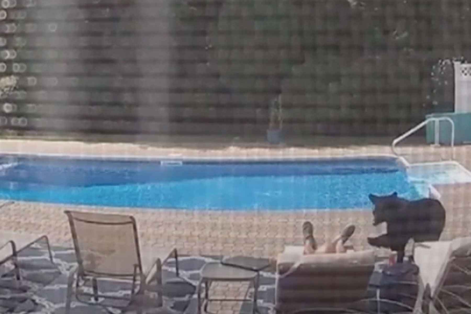 black bear and man in pool area