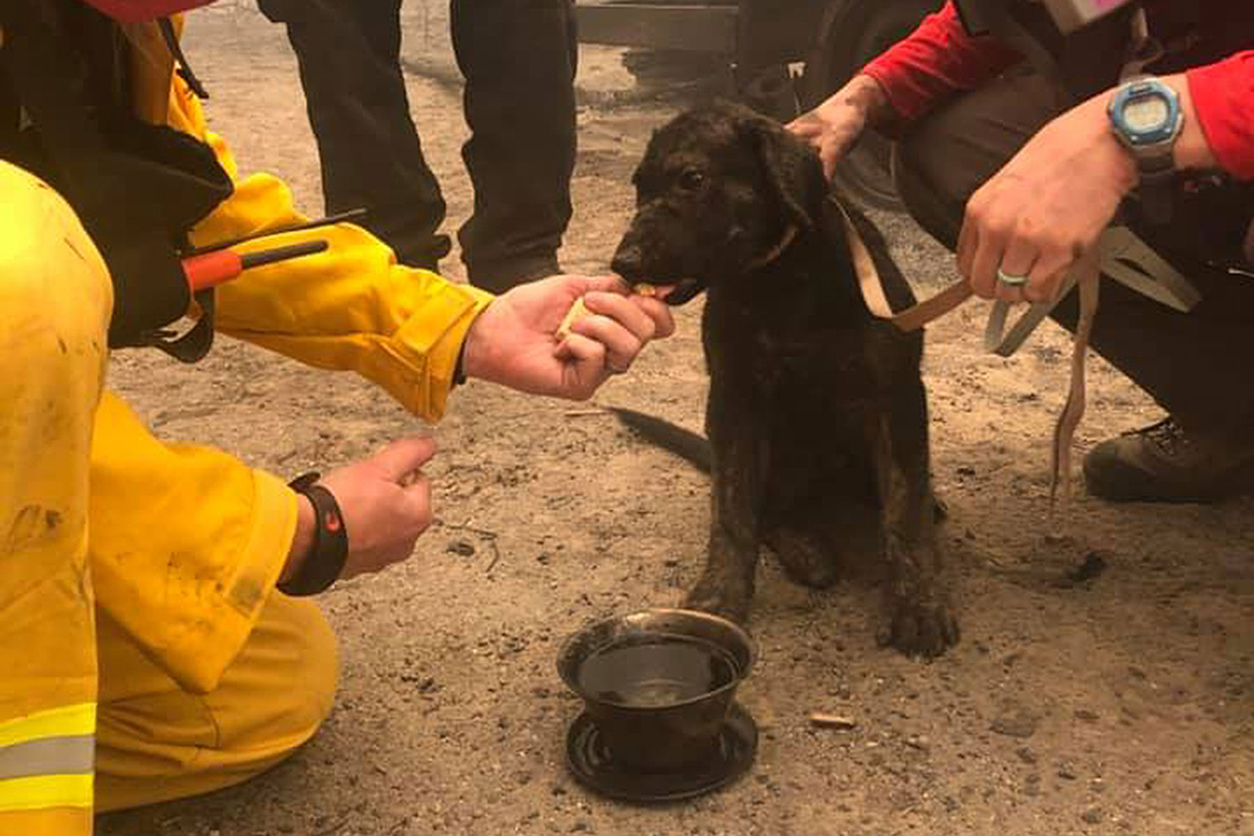 rescue workers feeding dog