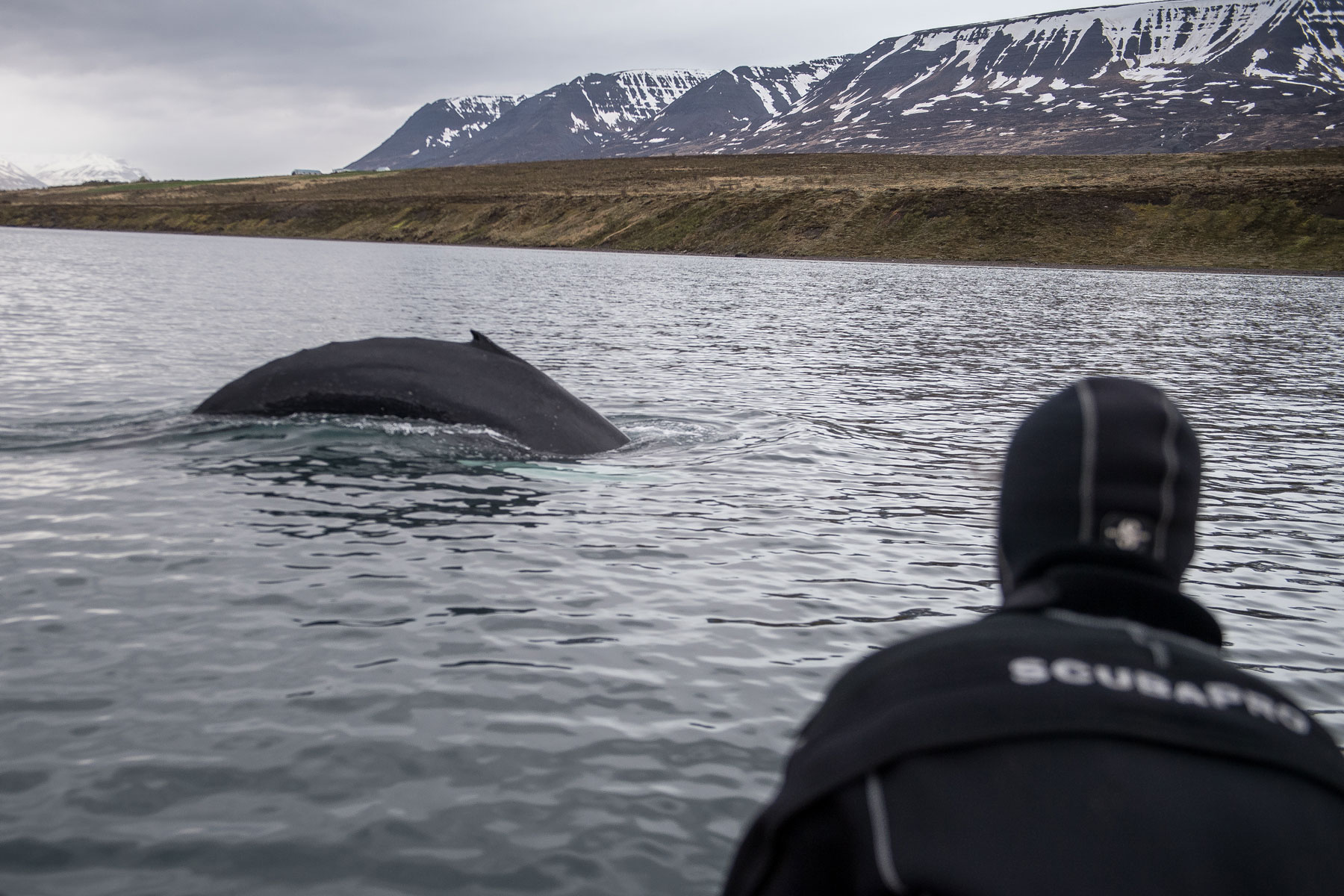 Person watching whale breech