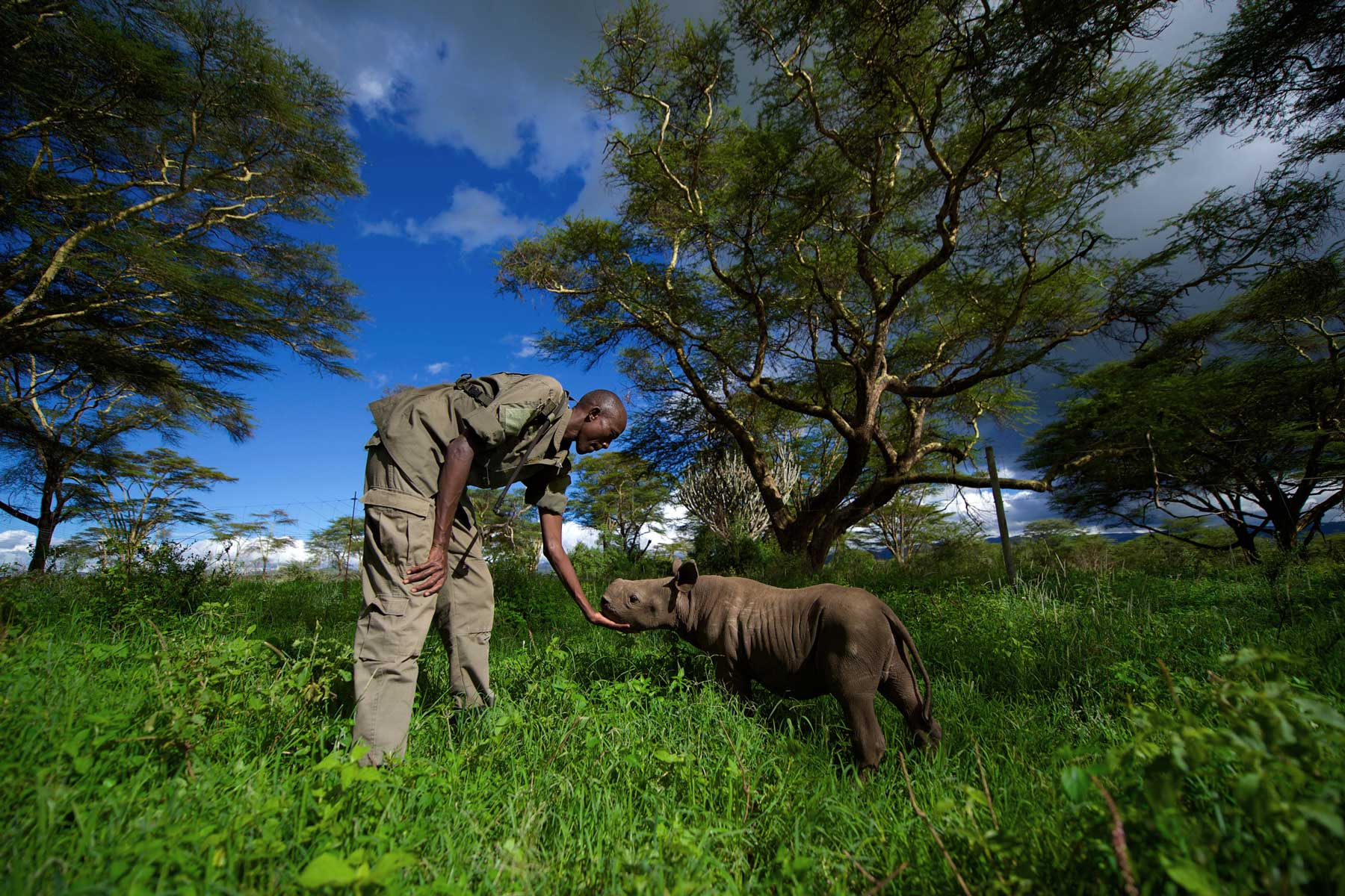 Leruati Morijo, a ranger at a remote outpost on Lewa wildlife Conservancy in Kenya, cares for a baby rhino