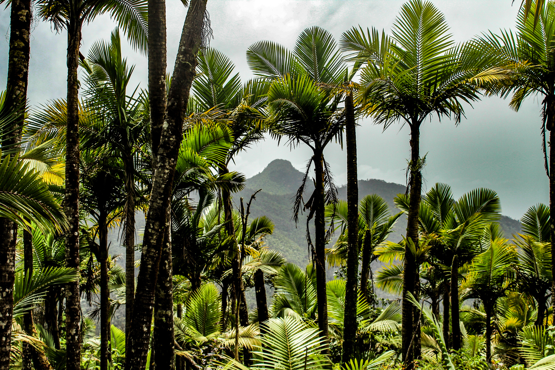 Views of El Yunque National Forest in Puerto Rico