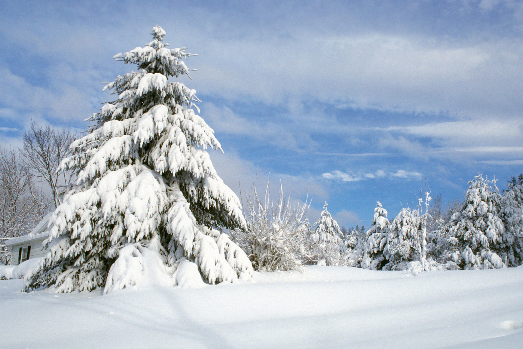 Thick blanket of snow and snow covered trees in Lenox, Massachusetts