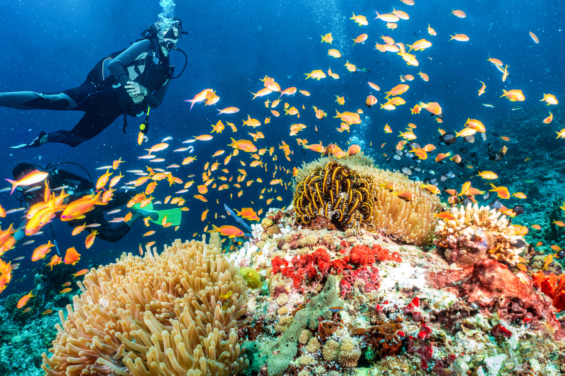 Woman Diving Under Sea By Coral in Maldives