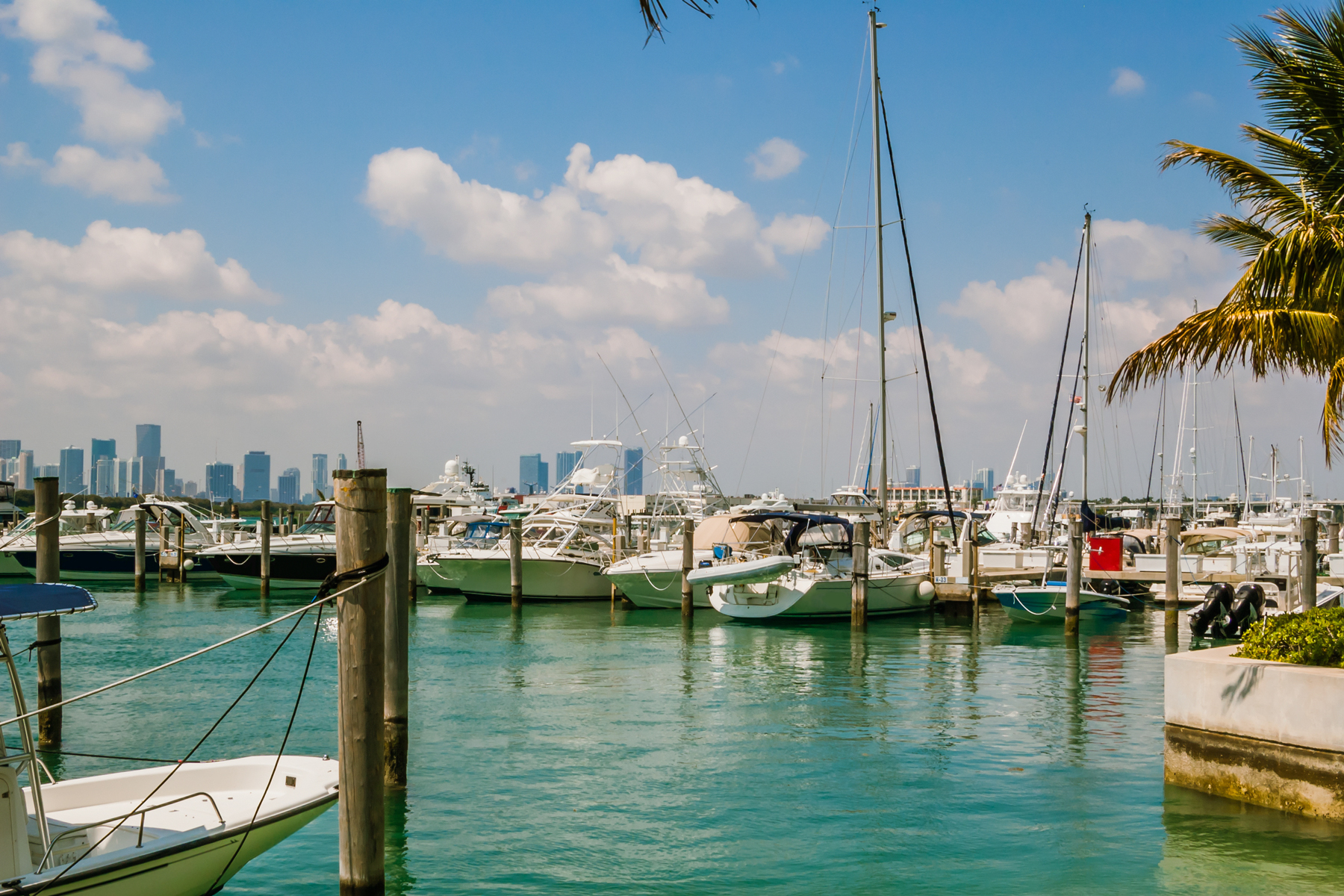 Boats at a Marina in Miami Beach with skyline in the background