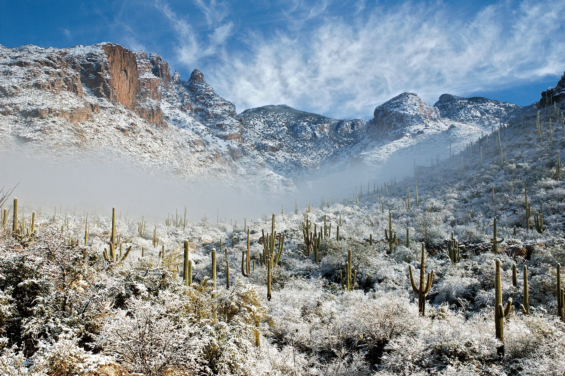 Snowfall on cactus and saguaros at Finger Rock in Tucson, Arizona.
