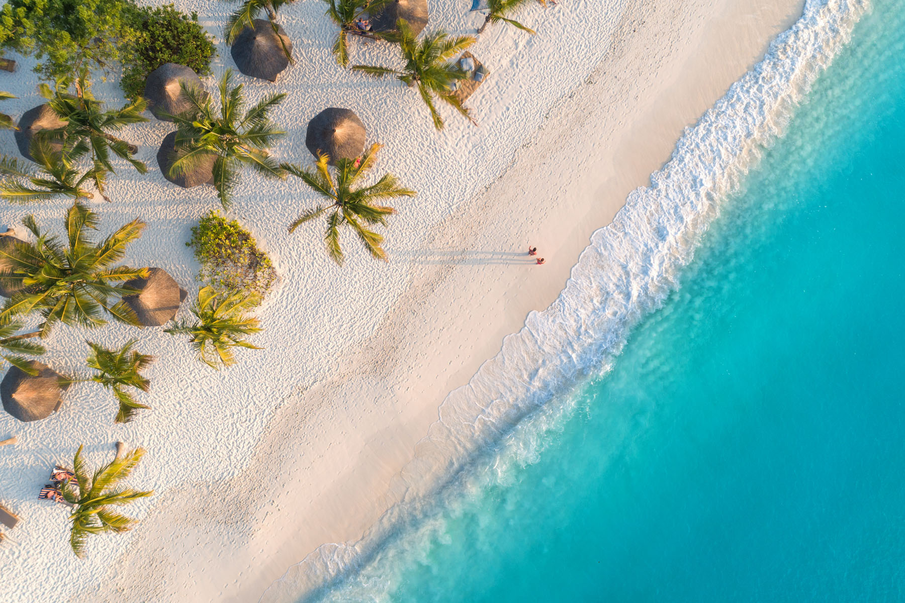 Top-down picture of palm trees and beach
