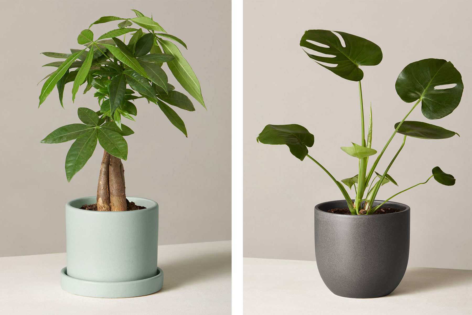 Two plants in ceramic pots