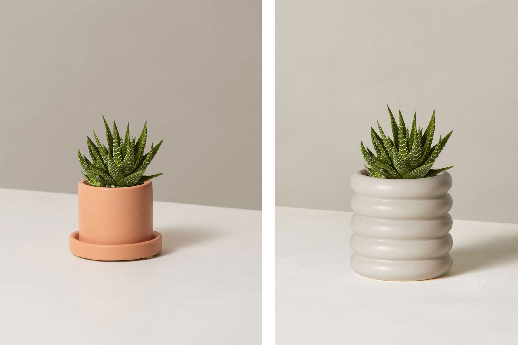 Two succulents in ceramic pots
