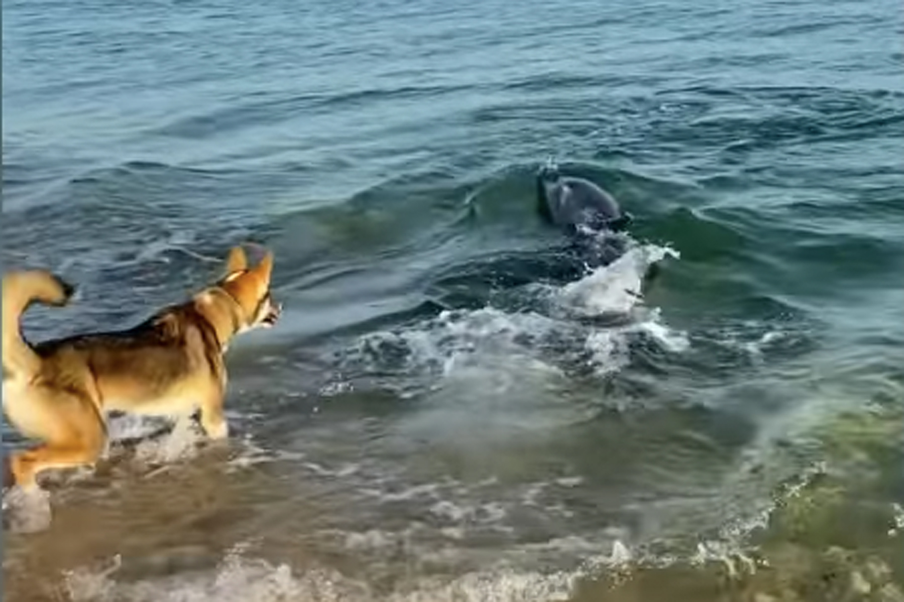 dog playing with dolphins