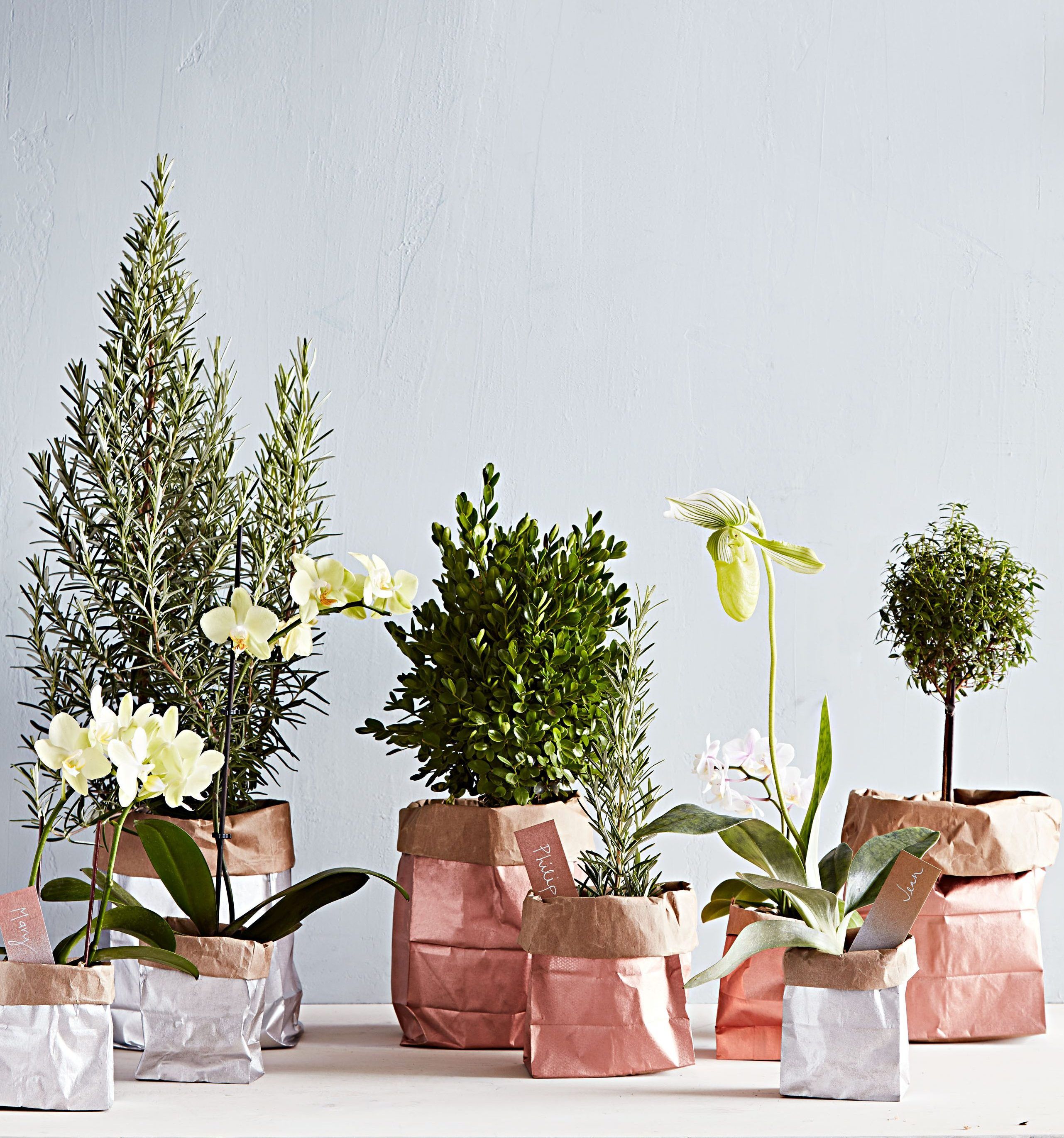 Give Spray-Painted Plant Gift Bags