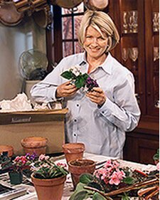 Repotting African Violets | Martha Stewart