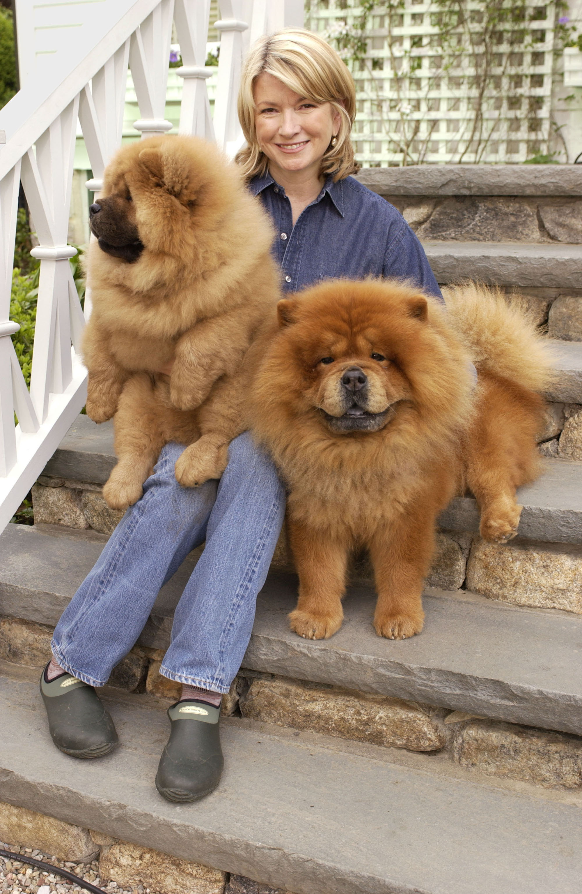 martha stewart sitting with chow chows