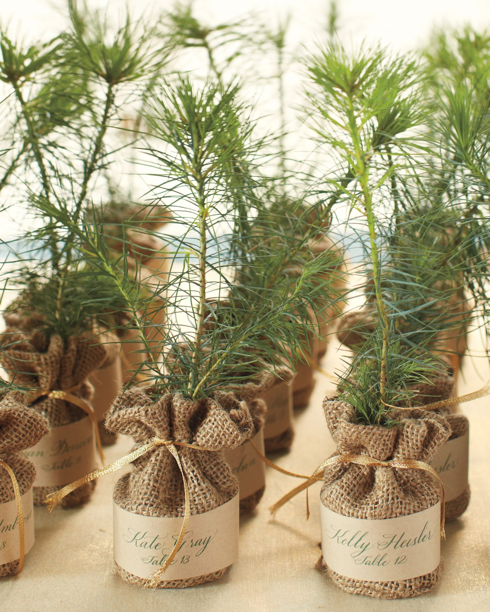 Pine Tree Favors