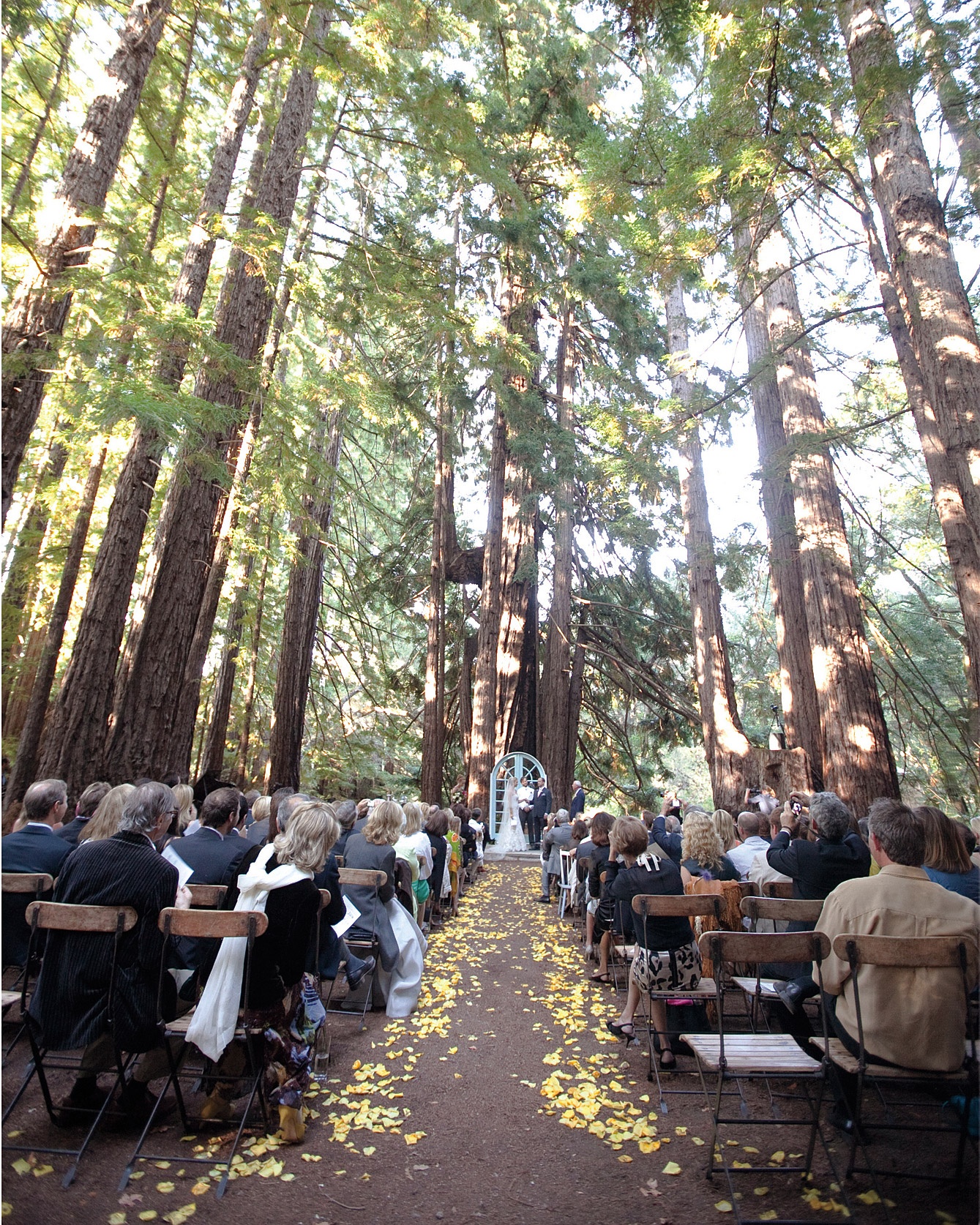 The Tree-lined Ceremony