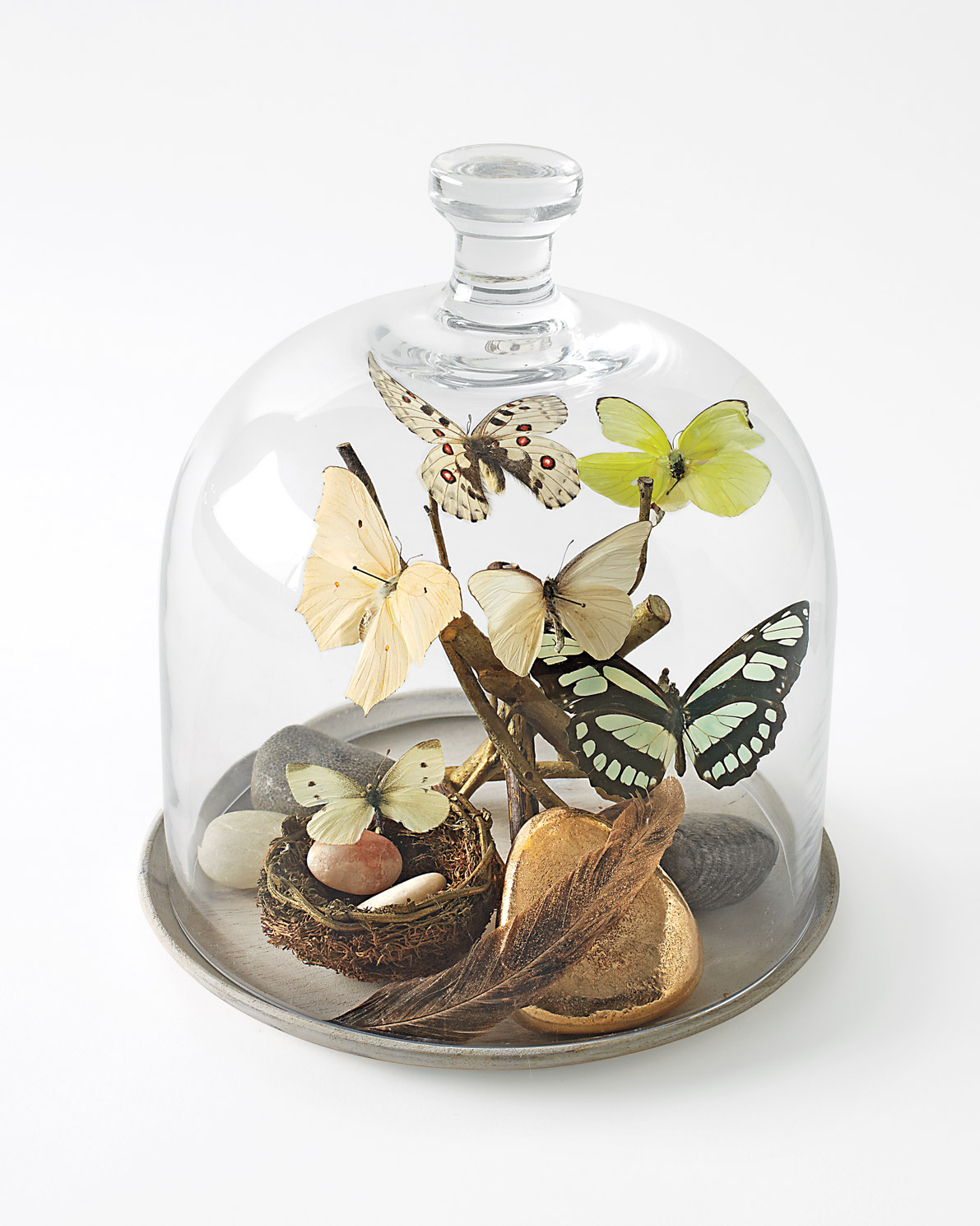 butterfly-dome-mld108210.jpg