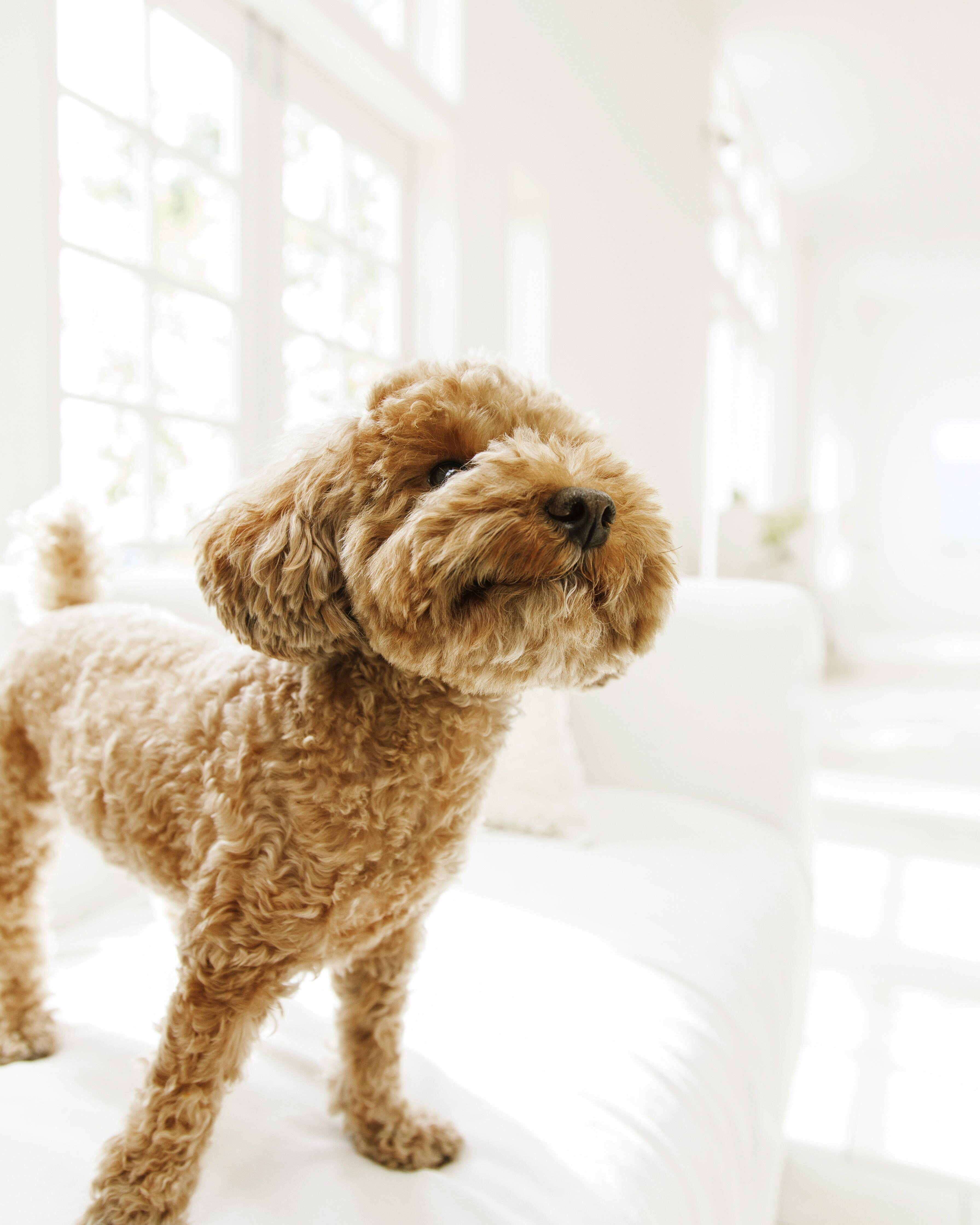 Clean-House Tips for Pet Owners | Martha Stewart