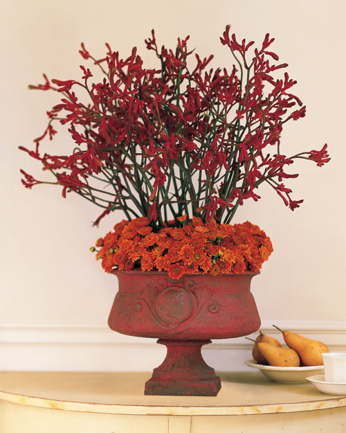 Kangaroo Paw Arrangement