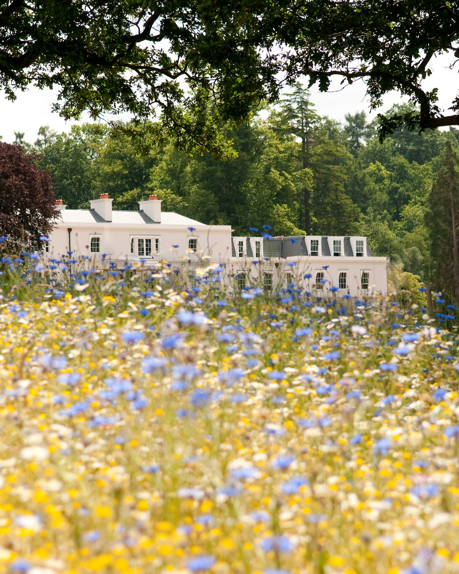 mr-mrs-smith-travel-hotels-wd0413-coworth-park-meadow-exterior.jpg